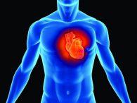 p heart